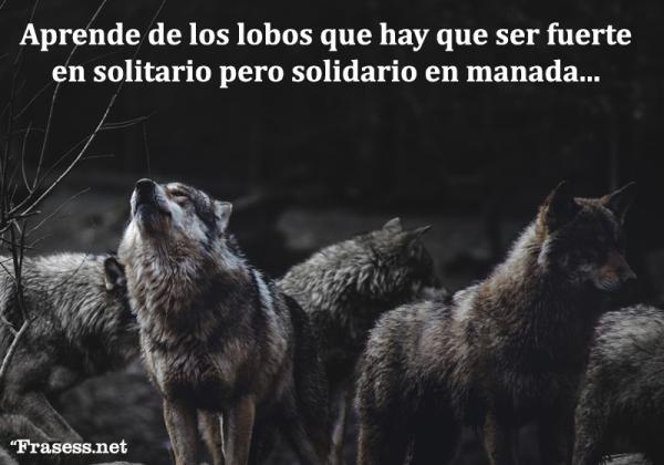 Frases de lobos - Aprende de los lobos que hay que ser fuerte en solitario pero solidario en manada.