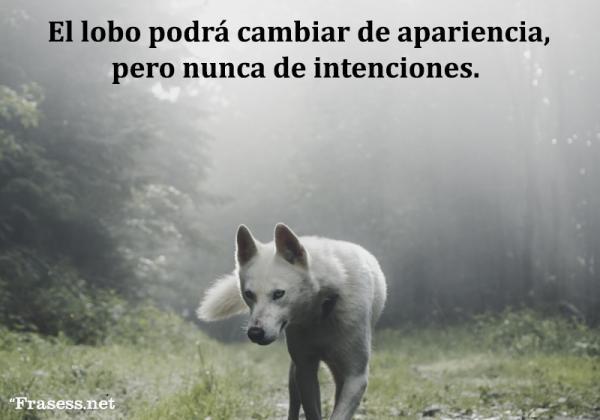 Frases de lobos - El lobo podrá cambiar de apariencia, pero nunca de intenciones.