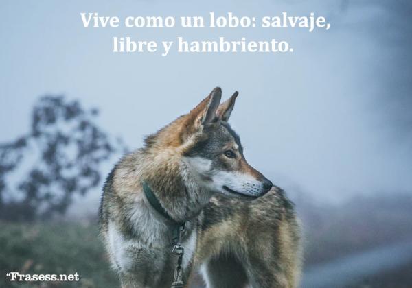 Frases de lobos - Vive como un lobo: salvaje, libre y hambriento.