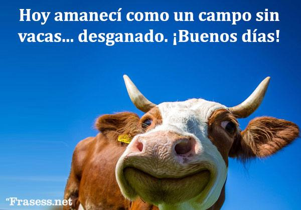 Frases de buenos días graciosas - Hoy amanecí como un campo sin vacas: desganado. ¡Buenos días!