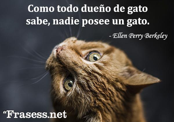Frases de gatos - Como todo dueño de gato sabe, nadie posee un gato.
