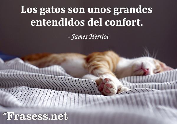 Frases de gatos - Los gatos son unos grandes entendidos del confort.