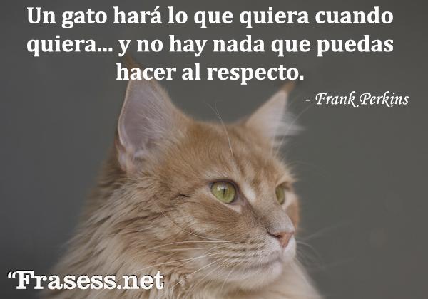 Frases de gatos - Un gato hará lo que quiera cuando quiera... no hay nada que puedas hacer al respecto.