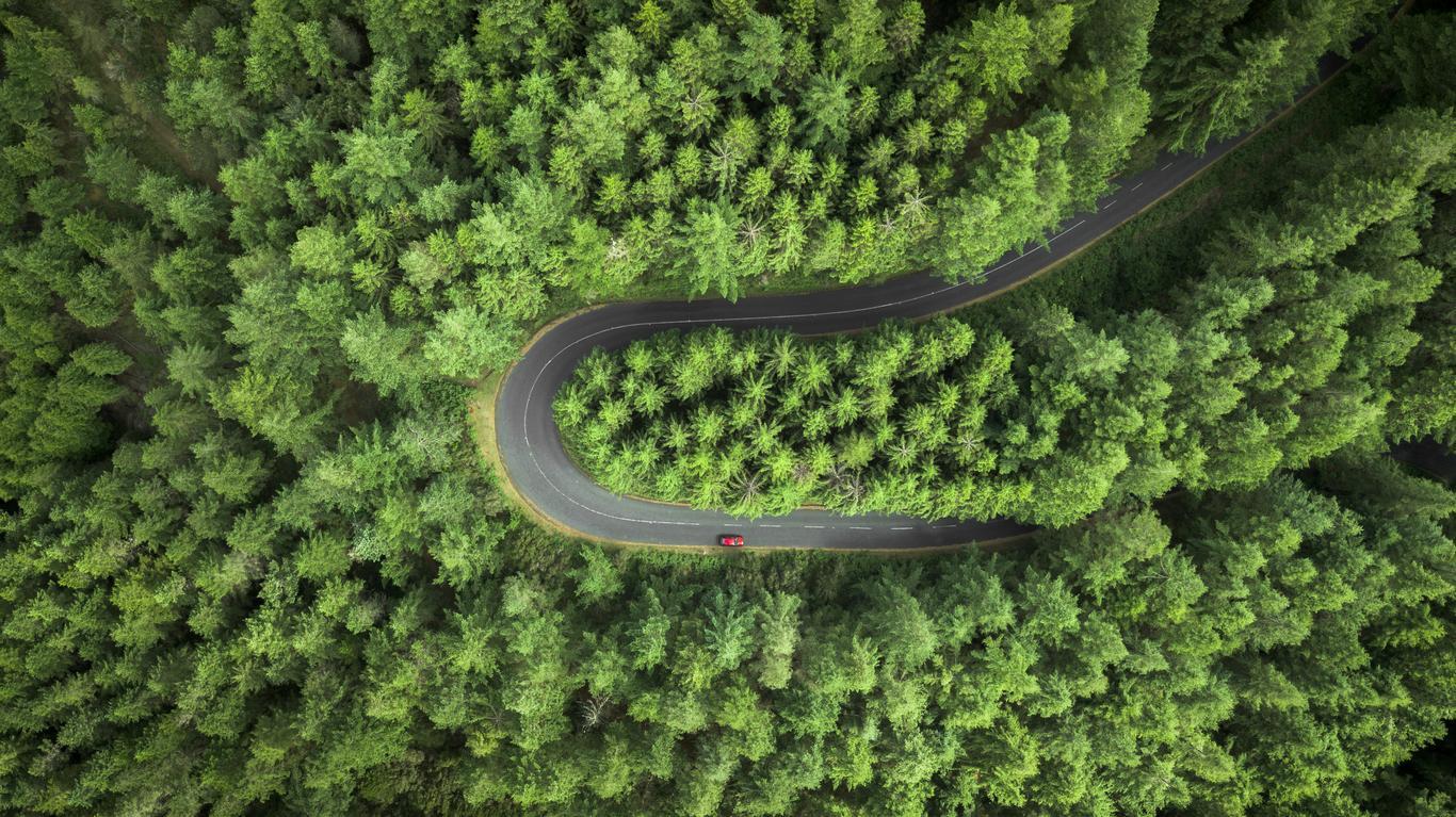 60 Frases Del Medio Ambiente Para Reflexionar