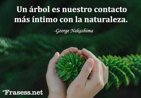 Frases de árboles - Un árbol es nuestro contacto más íntimo con la naturaleza.