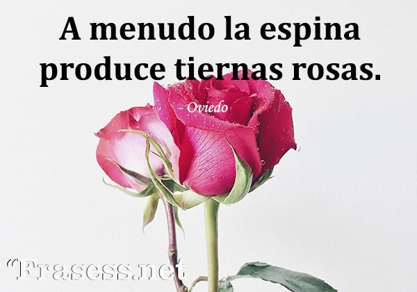 Frases de flores - A menudo la espina produce tiernas rosas.