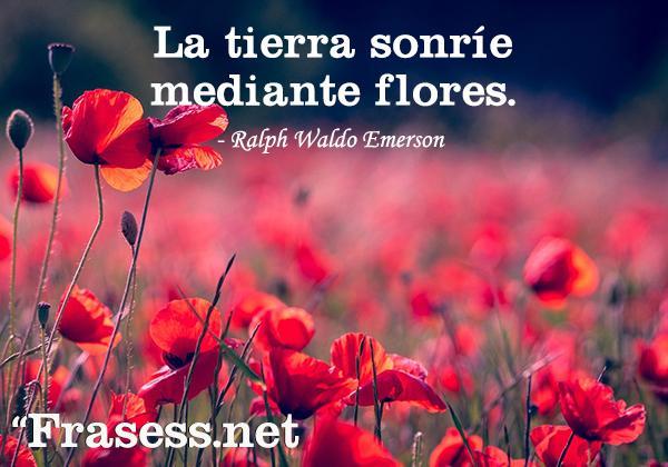 Frases de flores - La tierra sonríe mediante las flores.