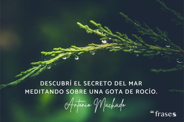 Frases de Antonio Machado - Descubrí el secreto del mar meditando sobre una gota de rocío.