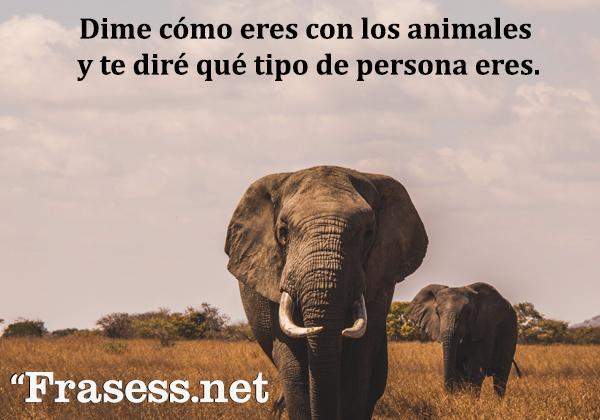 Frases de animales - Dime cómo eres con los animales y te diré qué tipo de persona eres.