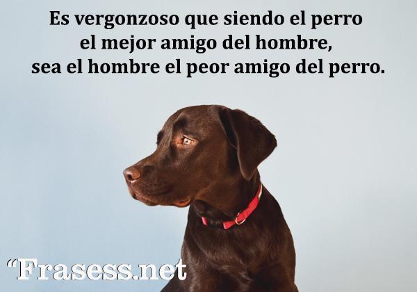 Frases de animales - Es vergonzoso que siendo el perro el mejor amigo del hombre, sea el hombre el peor amigo del perro.