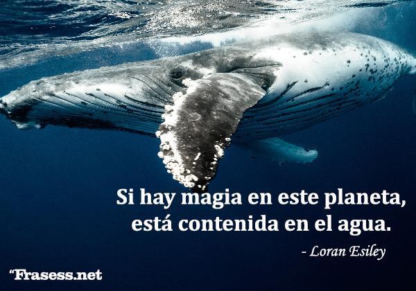 Frases sobre el agua - Si hay magia en este planeta, está contenida en el agua.
