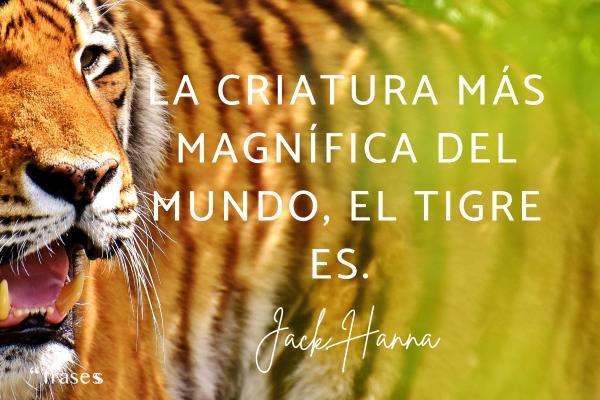 Frases de tigres - La criatura más magnífica del mundo, el tigre es.