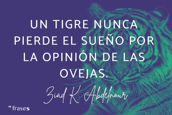 Frases de tigres - Un tigre nunca pierde el sueño por la opinión de las ovejas.