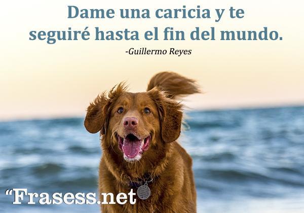Frases de perros - Dame una caricia y te seguiré hasta el fin del mundo.