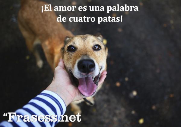 Frases de perros - ¡El amor es una palabra de cuatro patas!