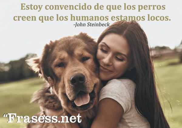 Frases de perros - Estoy convencido de que los perros creen que los humanos estamos locos.