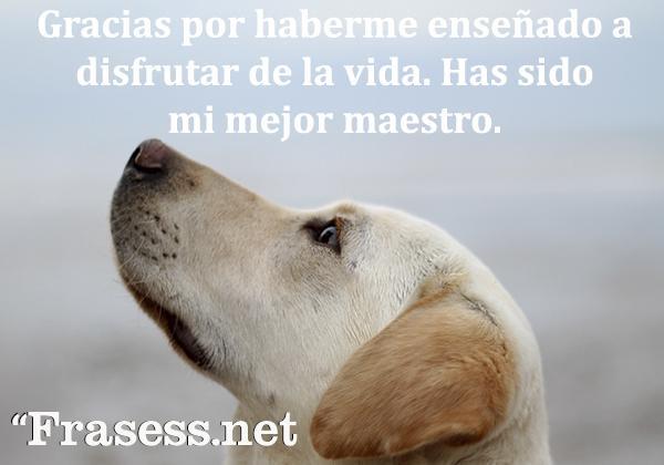 Frases de perros - Gracias por haberme enseñado a disfrutar de la vida. Has sido mi mejor maestro.