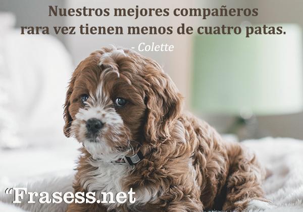 Frases de perros - Los mejores compañeros rara vez tienen menos de cuatro patas.