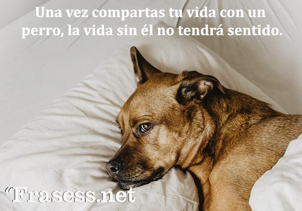 Frases de perros - Una vez compartes tu vida con un perro, la vida sin él no tiene sentido.