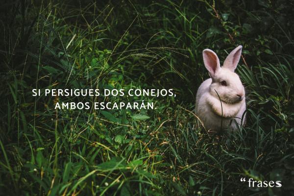 Frases de decisiones - Si persigues dos conejos, ambos escaparán.