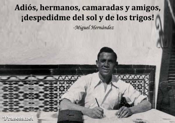 Frases de Miguel Hernández - Adiós, hermanos, camaradas y amigos, ¡despedidme del sol y de los trigos!