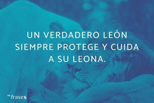 Frases de leones - Un verdadero león siempre protege y cuida a su leona.