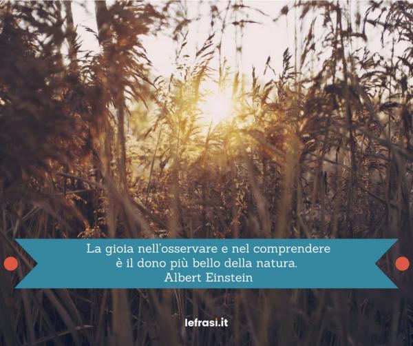 Frasi di Albert Einstein - La gioia nell'osservare e nel comprendere è il dono più bello della natura.