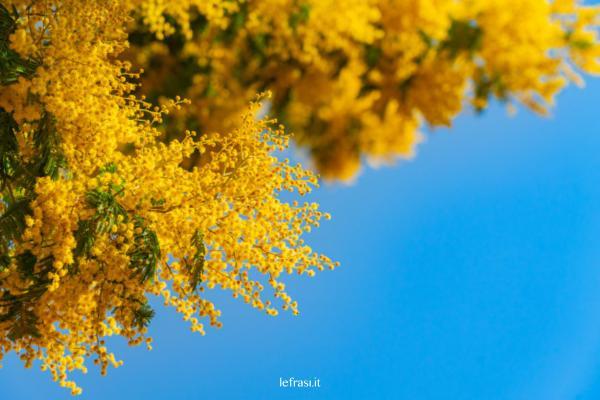 Festa della Donna: consigli per festeggiare l'8 marzo - Il significato della Mimosa